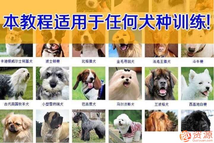狗狗训练教程视频和技巧大全